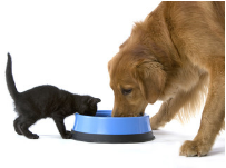 Does your pet eat healthy?